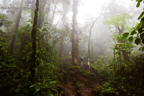 Rainforest and Jungle Photography Tutorial & Tips