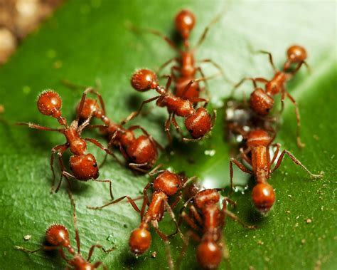 Types Of Ants | Types Of