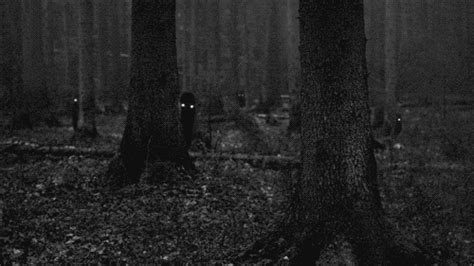 Woods Shadows GIF - Find & Share on GIPHY