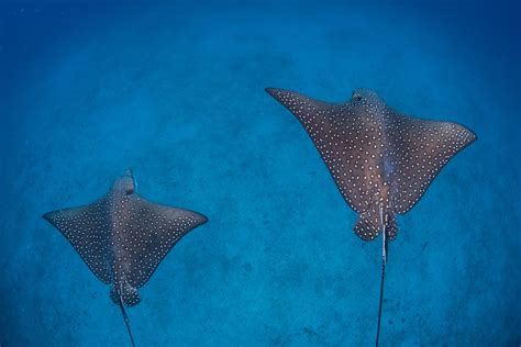 Cocos Island Liveaboard Costa Rica Diving Holiday