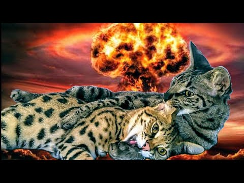 Differences Between Ligers and Tigons: All About Cat Hybrids