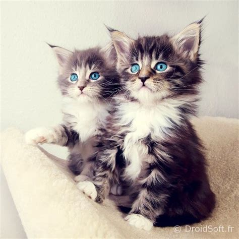 Double chat wallpaper android - DroidSoft